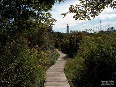 cape may lighthouse/birding path