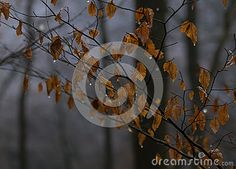 Photo about Mystical autumn forest, branches with orange leaves on cold woods background. Image of background, cold, ground - 83436416 Dark Tree, Orange Leaf, Tree Trunks, Autumn Forest, Wood Background, Branches, Mystic, The Darkest, Woods