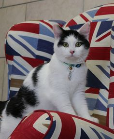 Palmerston (@DiploMog) | Twitter Delighted to announce @LawrenceDipCat as my first overseas envoy in Amman, Jordan. I'm sure he'll make a purrfect diplocat and mouser.