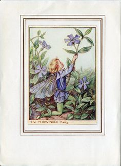 Periwinkle Flower Fairy Vintage Print, c.1950 Cicely Mary Barker Book Plate Illustration by TheOldMapShop on Etsy