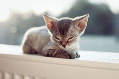 A tiny kitten cozies up on top of a radiator near a window.
