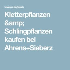 Kletterpflanzen & Schlingpflanzen kaufen bei Ahrens+Sieberz