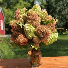 Anyone else have Limelight Hydrangea fever like me ? ⠀ ⠀ We have been shipping our burlap wrapped hydrangea bouquets all over the country… Limelight Hydrangea, Farm Pictures, Hydrangea Bouquet, Flower Farm, Flower Images, Fields, Bouquets, Burlap, Fruit