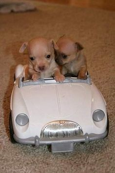 too cute #puppies