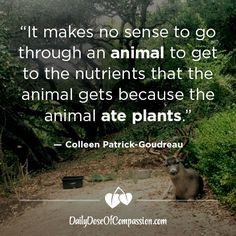 """It makes no sense to go through an animal to get to the nutrients that the animal gets because the animal ate plants."" -Colleen Patrick-Goudreau"