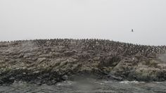 Pinguins @Beagle Canal