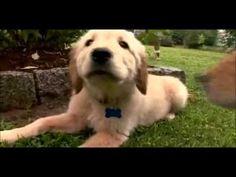 Dogs 101 Beagle, Golden Retriever, German Shepherd