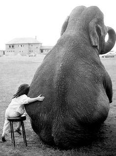 Little girl hugging elephant via: Brendan Ames  #elephant #elefante