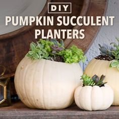 Make Mini Pumpkins Into Fall Succulent Planters,Handmade & DIY DIY Pumpkin Succulent Planter Like: