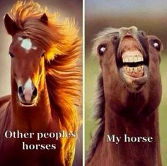 Which one is your Horse? #henshorseshomesteading #horsefunnies #funnyhorses #horses #lovehorses www.henshorseshomesteading.com