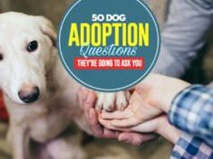 50 Dog Adoption Questions Shelters Ask Dog Grooming Salons, Dog Grooming Business, Poodle Grooming, Dog Care Tips, Pet Care, Pet Tips, Cataracts In Dogs, Kill Fleas On Dogs, Black Lab Puppies