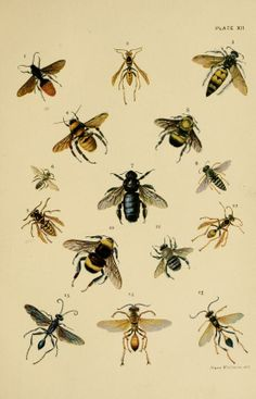 American insects / - Biodiversity Heritage Library