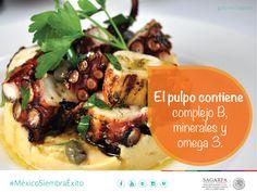 El pulpo contiene complejo B, minerales y omega 3. SAGARPA SAGARPAMX #MéxicoSiembraÉxito