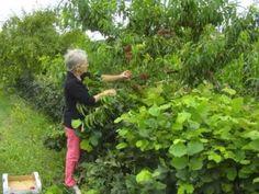 Vers un verger agroforestier ? - Evelyne Leterme, conservatoire végétal ...