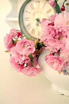 fiori di ciliegio ornamentale Kanzan