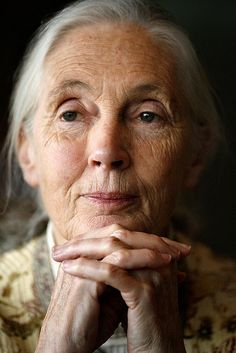 Jane Goodall - An English primatologist, considered to be the world's foremost expert on chimpanzees. She is the founder of the Jane Goodall Institute and has worked extensively on conservation and animal welfare issues. Jane Goodall, Beautiful People, Beautiful Women, Beautiful Soul, Beautiful Person, Photo Portrait, People Of Interest, Celebrity Gallery, Ageless Beauty
