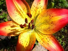 close up yellow flower - Google Search