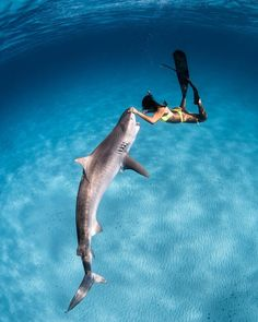 Breathtaking underwater shots by André Musgrove, a multi-talented photographer, filmmaker, freediver, and scuba diving instructor from the little island of… Under The Water, Under The Sea, Underwater Pictures, Ocean Underwater, Gopro Underwater, Underwater Photographer, Ocean Creatures, Ocean Life, Marine Life