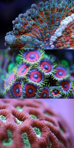 This makes me want to experiment with color more in my knitting! Macro Shots of Underwater Corals (  by Felix