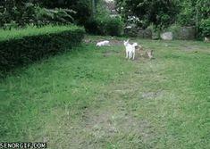 Nice try little dog http://ift.tt/2lnLr8P