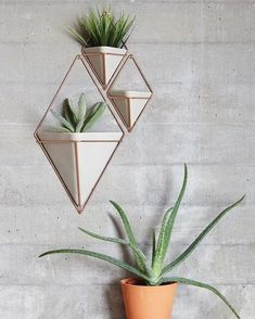 D.Signers Products - Planters design by Moe Takemura