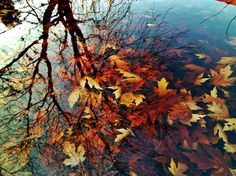 Autumn Reflection  by ~Bleeding-Raindrops - Click image to find more Photography Pinterest pins