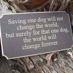 Tucker changed our world. - Click image to find more Animals Pinterest pins