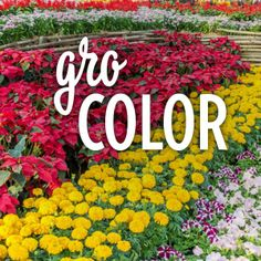 """What inspires you to """"Gro Something Greater?"""" Show us, and you could win the chance to spend the afternoon with Martha Stewart's gardener"""