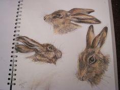 sketchbook hares by LiNdA WiLSoN