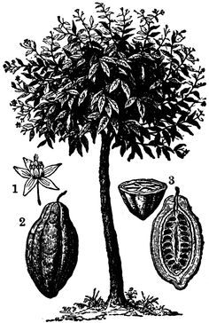 87723_cocoa-plant_lg.gif (Imagen GIF, 663 × 1024 píxeles)