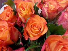 #Rose #Careless Wisper; Available at www.barendsen.nl