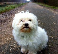 What a cute dog.