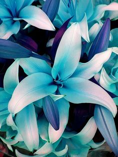 Beautiful turquoise flowers