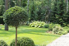 Gardenarium Tree Garden, Garden Plants, Pine Tree, Sidewalk, Pine, Pavement, Patio Plants, Curb Appeal