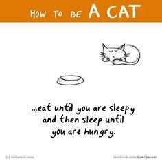 How to be a cat (lastlemon.com)