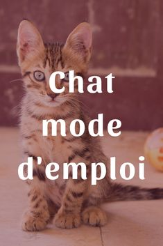 housse si le canapé miaule..humour Chat Coussin 40x40 cm garnissage