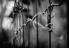 A fence over me, Lucian Olteanu, Photographie, Numérique Fence, Images, Group Projects, Digital Photography