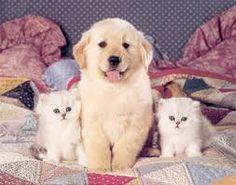Resultado de imagem para cachorros e gatos adultos fofos