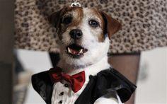The Artist's Uggie wins top dog at Golden Collar Awards
