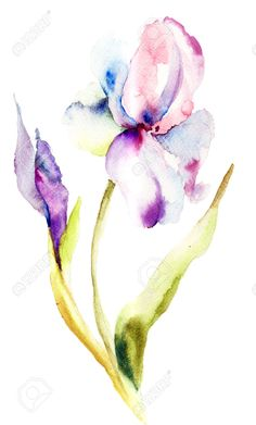 iris flower watercolor - Google Search