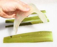 Aloe Vera é geralmente chamada de a planta milagrosa, a cura natural, dentre outros nomes que sobreviveram por 4.000 anos dentro dos quais essa planta tem beneficiado a humanidade. George Ebers em 1862 foi o primeiro a descobrir o uso da Aloe na antiguidade em um antigo manuscrito egípcio datado