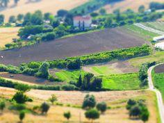 Italy, Marche, Osimo- Campagna marchigiana -Italian countryside - Photo by Gianni Del Bufalo (CC BY-NC-SA 2.0)इटली 意大利 Italujo イタリア Италия איטאליע إيطاليا