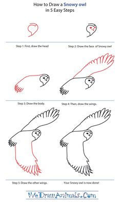 How to Draw a Barn Owl, Step by Step, Birds, Animals, FREE ...
