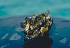 Trillions of invasive mussels have taken over the Great Lakes, damaging ecosystems and infrastructure. Sign this petition to support research on mussel eradication strategies and save native fish and bird species.
