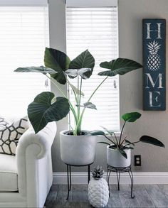 50 Ways To Display Plants and Flowers in Your Home These trendy Planters ideas would gain you amazing compliments. Check out our gallery for more ideas these are trendy this year. Decorative Planters, Condo Living, Living Room, Bedroom Plants, Bedroom Green, Summer Garden, Plant Decor, Houseplants, Indoor Plants