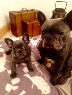 Lola and her mummy Ruby http://ift.tt/2tIS7TC