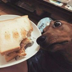 Reminds me of my dog! lmao