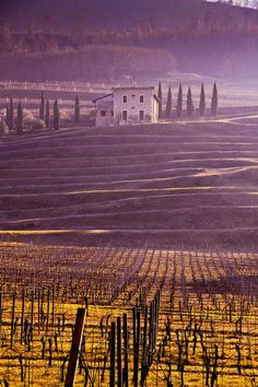 Winter vineyards, Valpolicella Italy by Lynne Otter