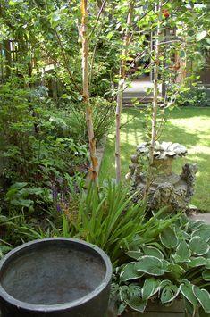 garden-of-rooms_pot-and-birch garden trees uk Top 10 best trees for small gardens - Living Colour Gardens Small Trees For Garden, Small Garden Design, Small Space Gardening, Small Courtyard Gardens, Small Courtyards, Back Gardens, Courtyard Design, Patio Design, Garden Shrubs