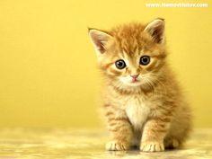 kitten | Kitten Kit :: All Paws Veterinary Clinic